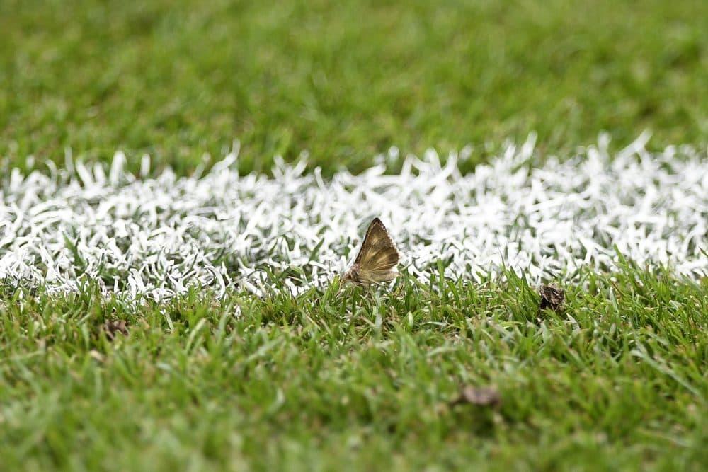 Thousands of migrating Silver Y Moths descended on the Stade de France for Sunday's Euro 2016 finale. (Martin Bureau/AFP/Getty Images)