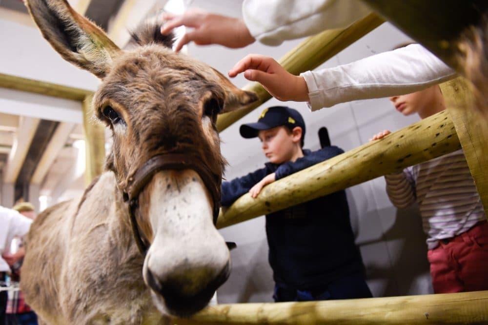 Children pet a donkey during the Paris international agricultural fair at the Porte de Versailles exhibition center in Paris on Feb. 26, 2015. (Loic Venance/AFP/Getty Images)
