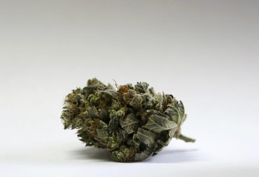 In this Friday, April 22, 2016 a marijuana bud is seen at a medical marijuana facility in Unity, Maine. (Robert F. Bukaty/AP)