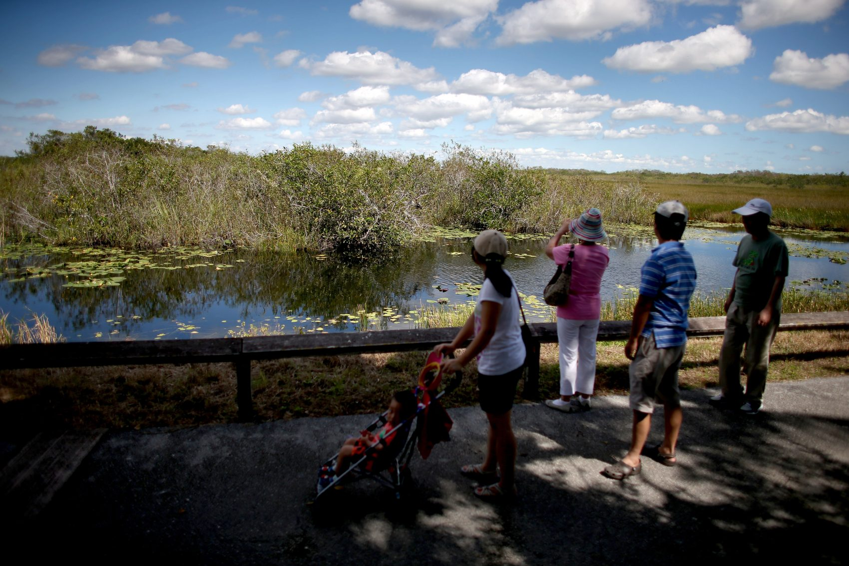 Visitors to the Everglades National Park enjoy the views on Oct. 17, 2013 in Miami, Florida. (Joe Raedle/Getty Images)