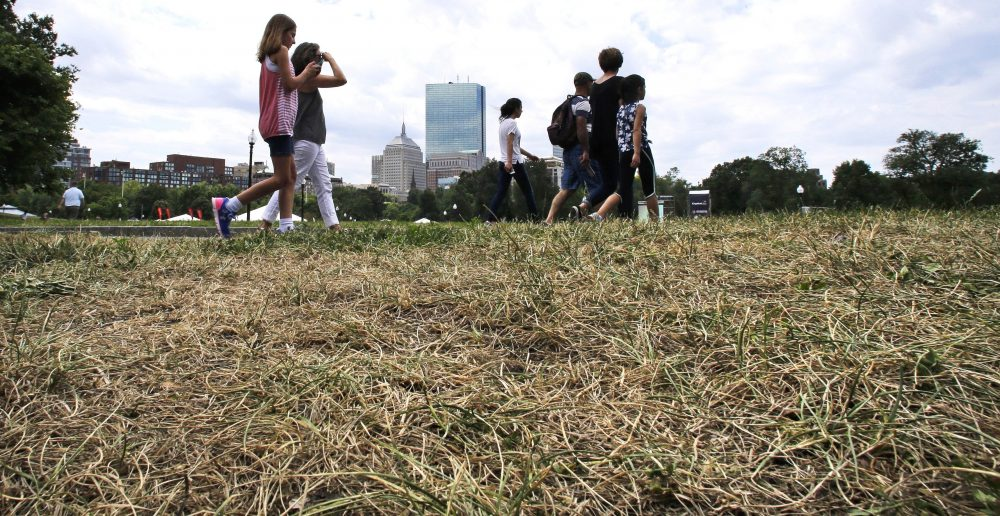 Tourists walk past parched, brown grass on the Boston Common in Boston. Much of the Northeast is in the grips of a drought that has led to water restrictions, wrought havoc on gardens and raised concerns among farmers. (Charles Krupa/AP)