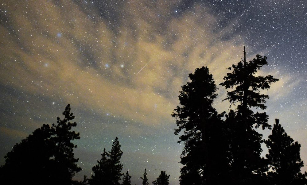 A Perseid meteor streaks across the sky above desert pine trees on Aug. 13, 2015 in the Spring Mountains National Recreation Area, Nevada. (Ethan Miller/Getty Images)