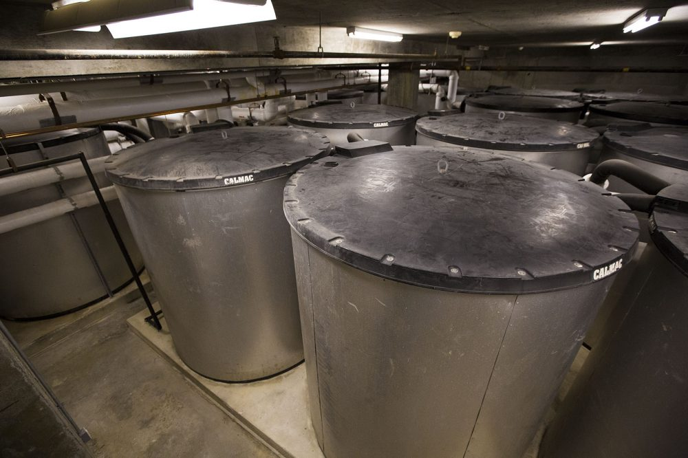 The tanks, which are filled with 1,500 gallons of water, turn into giant ice cubes over night to keep the building cool during the day. (Jesse Costa/WBUR)