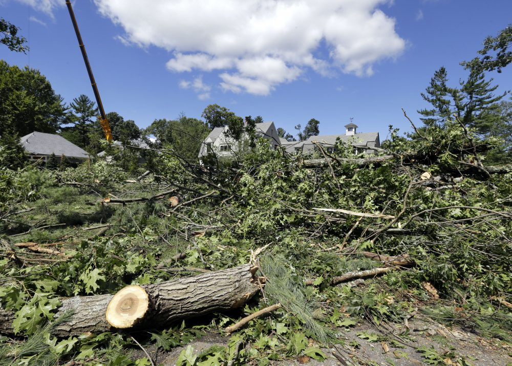 Tree debris covers the road and front yards of homes, in Concord. (Elise Amendola/AP)