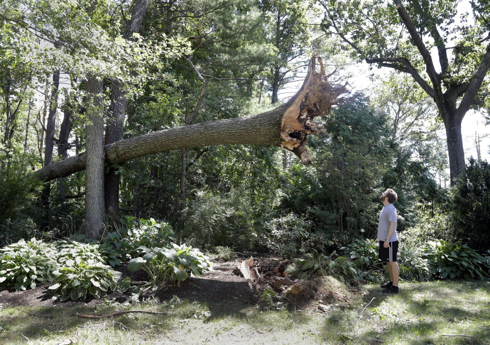 Ian Thompson looks at a tree uprooted in his Concord neighborhood after an EF-1 tornado touched down early Monday morning. (Elise Amendola/AP)