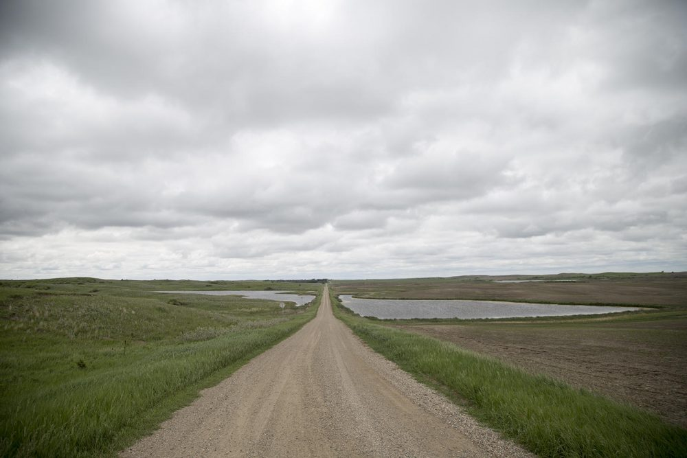 A rural road in the Prairie Pothole region of North Dakota divides a farm field from native prairie. (Clay Masters/IPR)