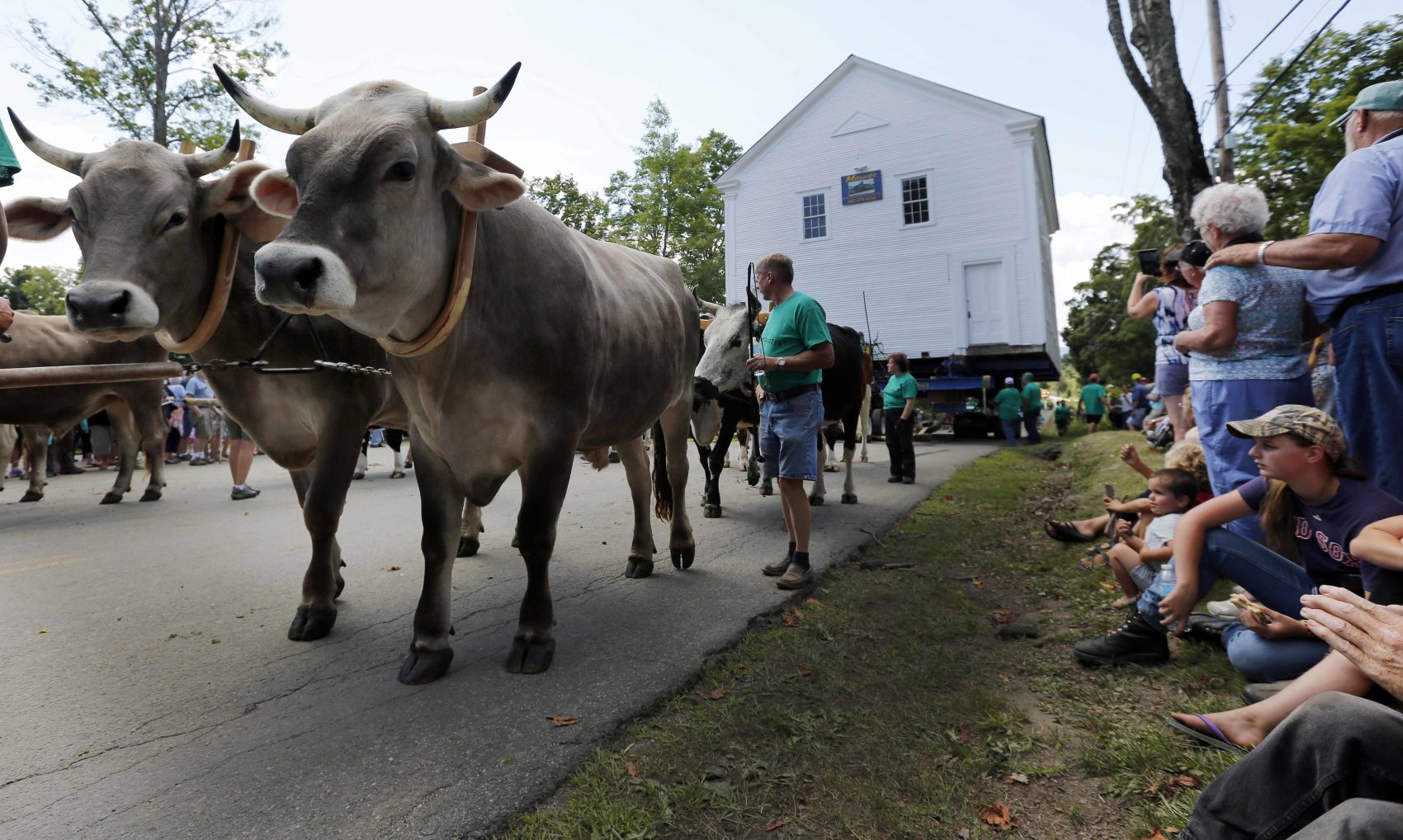 Approximately a thousand people showed up in Brownington, Vermont, on Monday to watch teams of oxen help pull the  Orleans County Grammar School, built in 1823, back to its original location. The oxen had the help of a modern day motor. (Jim Cole/AP)