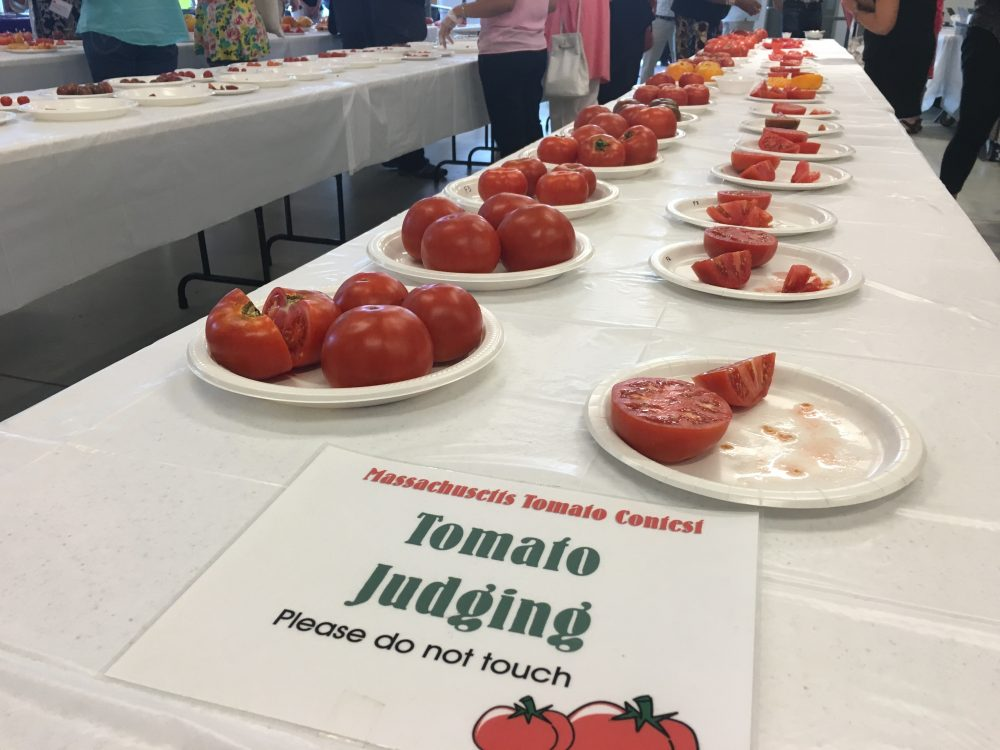Local tomatoes were sliced for judges to try at the 32nd annual Massachusetts Tomato Contest.