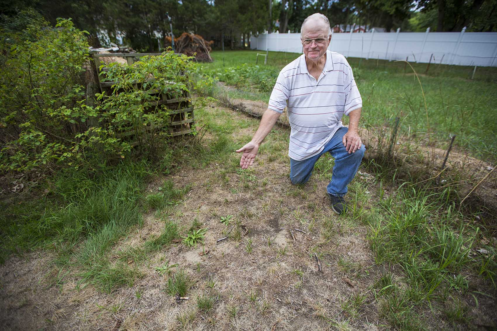 Fifty-year Billerica resident Tim Hinde displays his dried-out lawn, which he cannot water because of town restrictions on watering plants due to the summer drought conditions. (Jesse Costa/WBUR)