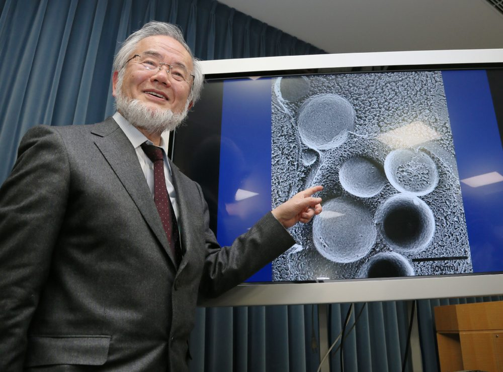 """This photo taken on March 25, 2015 shows Japanese scientist Yoshinori Ohsumi speaking during a press conference at the Ministry Of Education in Tokyo. Ohsumi won the Nobel Medicine Prize for his work on autophagy -- a process whereby cells """"eat themselves"""" -- which when disrupted can cause Parkinson's and diabetes. (Jiji Press/AFP/Getty Images)"""