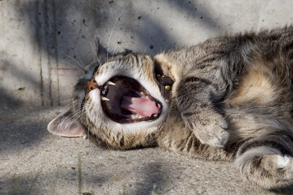 A new study found that the size of a yawn may be linked to the size of one's brain. (Unsplash)