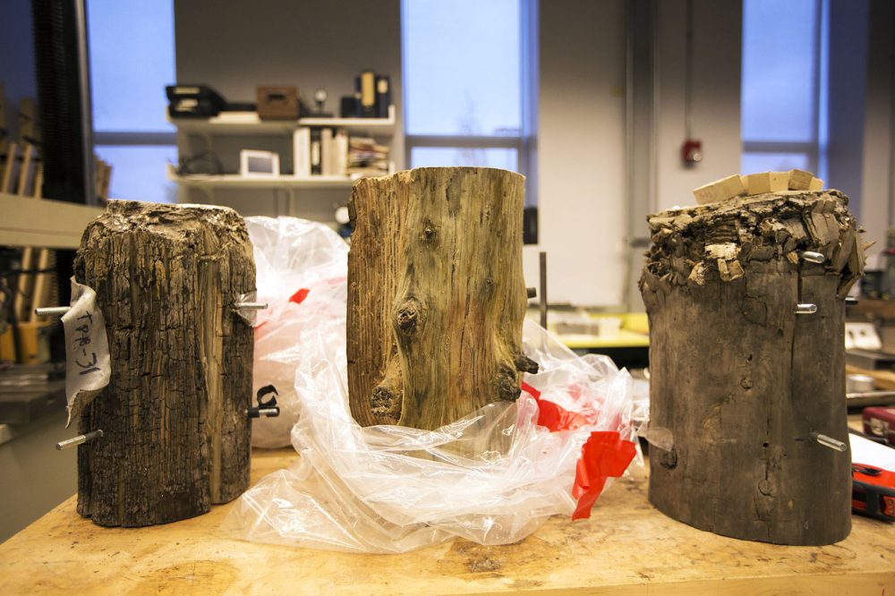 Samples of three pilings, which are about 120 years old, are seen in a Simpson Gumpertz & Heger lab, in Waltham. The pilings on the left and right have been compression tested to a weight well beyond their expected capabilities. (Jesse Costa/WBUR)
