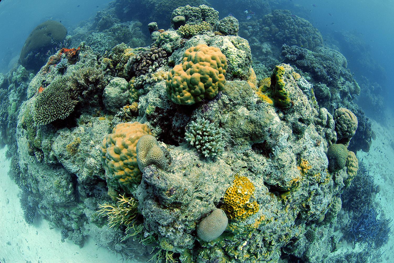 Saving Tanzania's coral reefs: A photo essay