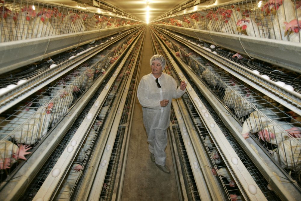 An egg processing plant at the Dwight Bell Farm in Atwater, Calif. (Marcio Jose Sanchez/AP)