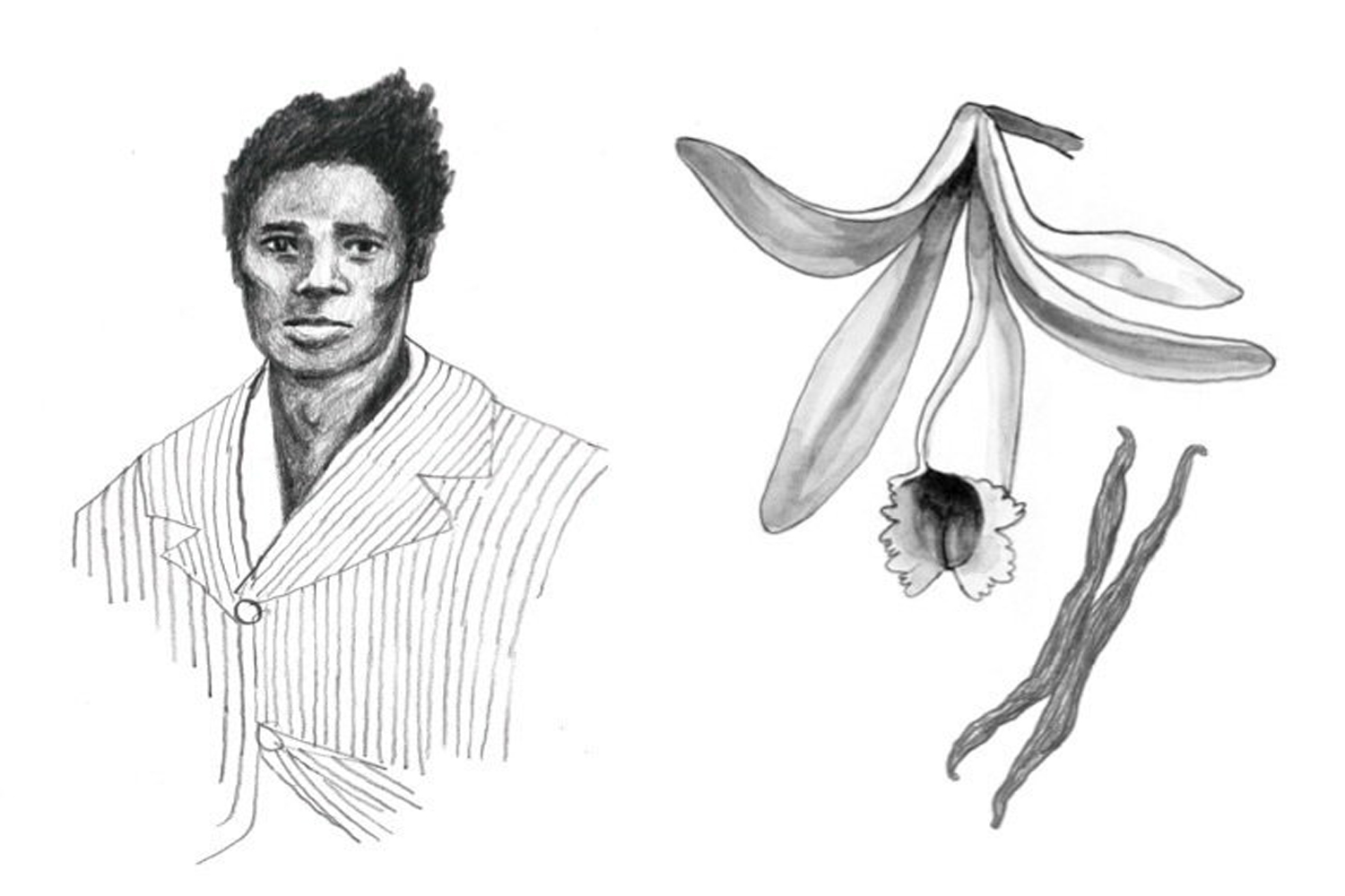 "A illustration of Edmond Albius and a vanilla plant from ""Eight Flavors."" (Illustration/Peter Van Hyning)"