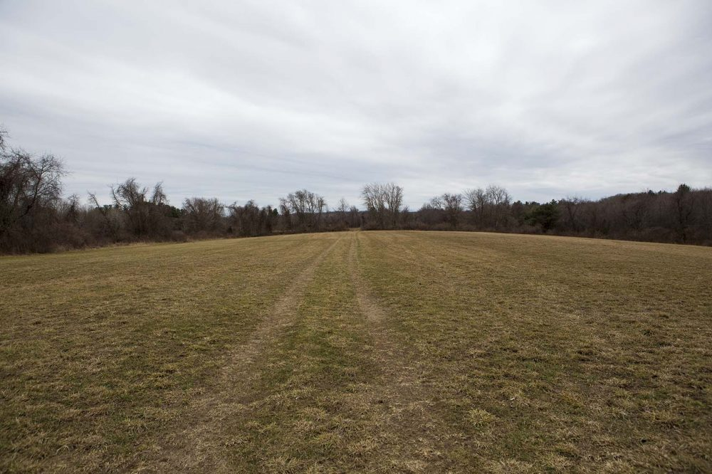 One of the fields of the property the Islamic Society of Greater Worcester could now potentially turn into a cemetery. (Jesse Costa/WBUR)