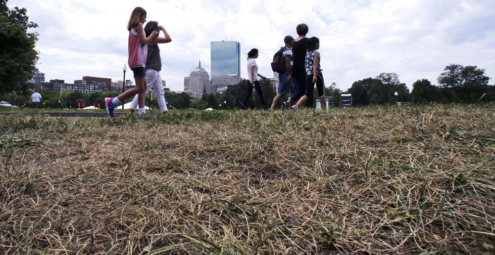 """""""Conditions have improved, but not to the point that we would sit back and relax,"""" the chair of the state's drought task force said Tuesday. Pictured here, tourists walk past browned and burnt grass on the Boston Common last summer. (Charles Krupa/AP)"""