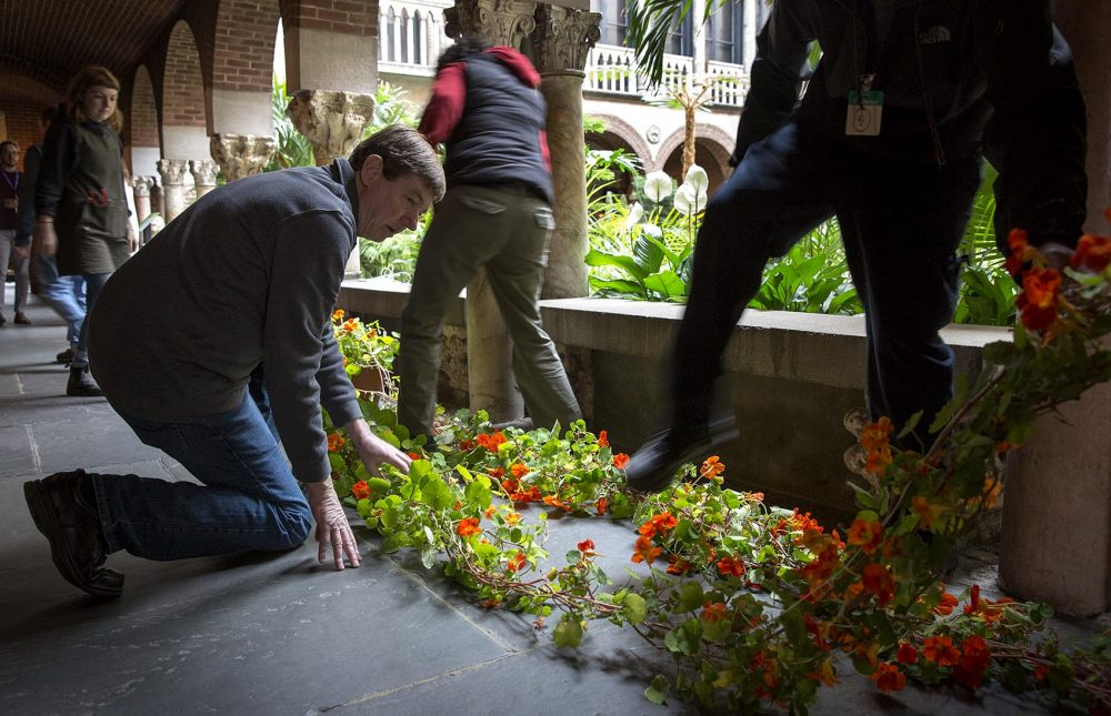 Kozak kneels by two nasturtium plants as staff lay them out in the museum cloisters and carefully step over them. (Robin Lubbock/WBUR)