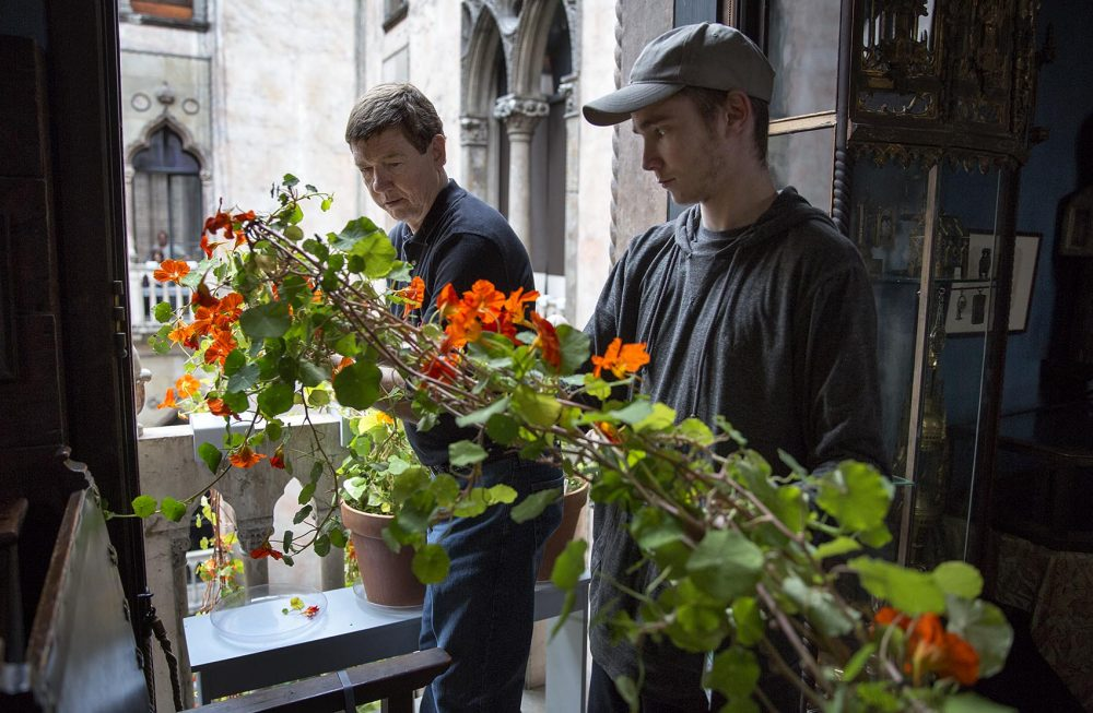 Kozak and Leland Eglin gently pass one of the nasturtium plants over a balcony into the museum courtyard. (Robin Lubbock/WBUR)
