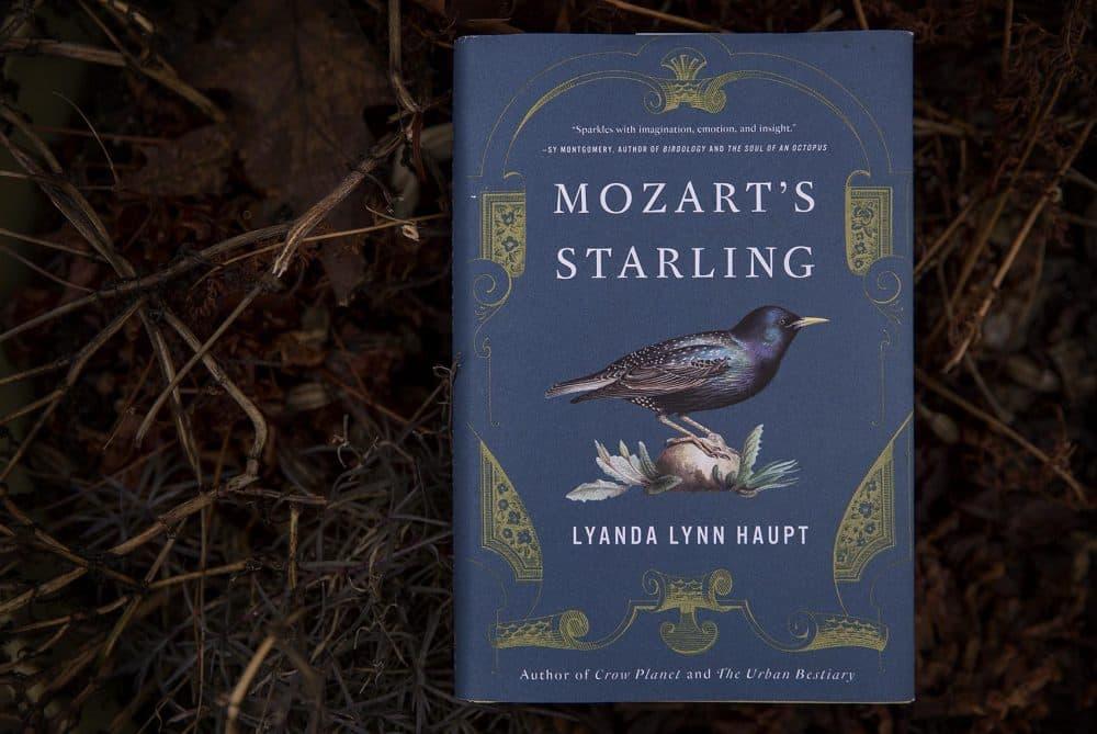 """""""Mozart's Starling,"""" by Lyanda Lynn Haupt. (Robin Lubbock/WBUR)"""