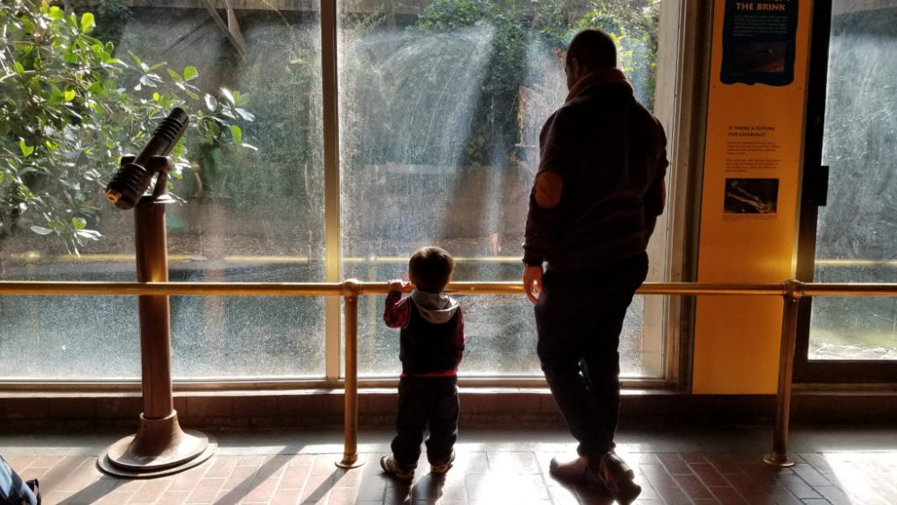 Hashmatulla Rasooly and his 2-year-old son take in the sights and sounds of the National Zoo a few weeks after arriving in the United States. The Rasoolys left Afghanistan after it became unsafe for the family because of Hashmatulla's work as an interpreter with U.S. forces. (Carmel Delshad / WAMU)