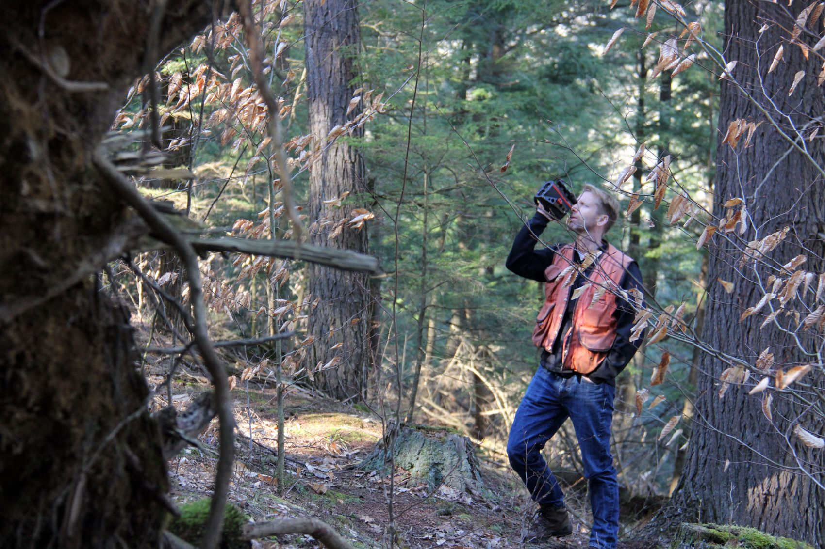 UVM forest ecologist Bill Keeton uses a laser rangefinder to measure the height of a tree in UVM's Jericho Research Forest. (Courtesy Kathleen Masterson/VPR)