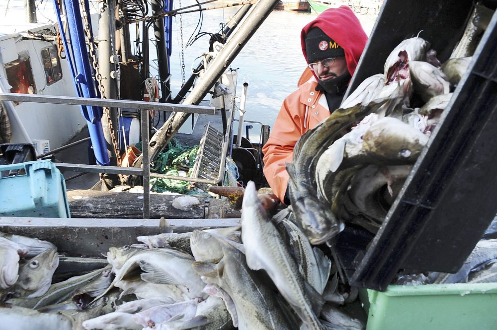 Dockworker Dominic Giovinco, of Gloucester, unloads cod from the fishing boat Lady Jane, in the background, at the Jodrey State Fish Pier in Gloucester on Jan. 16, 2009. (Lisa Poole/AP)