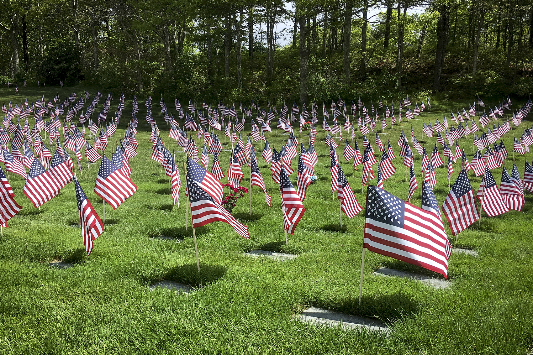 American flags placed at Massachusetts National Cemetery. (Alex Ashlock/Here & Now)