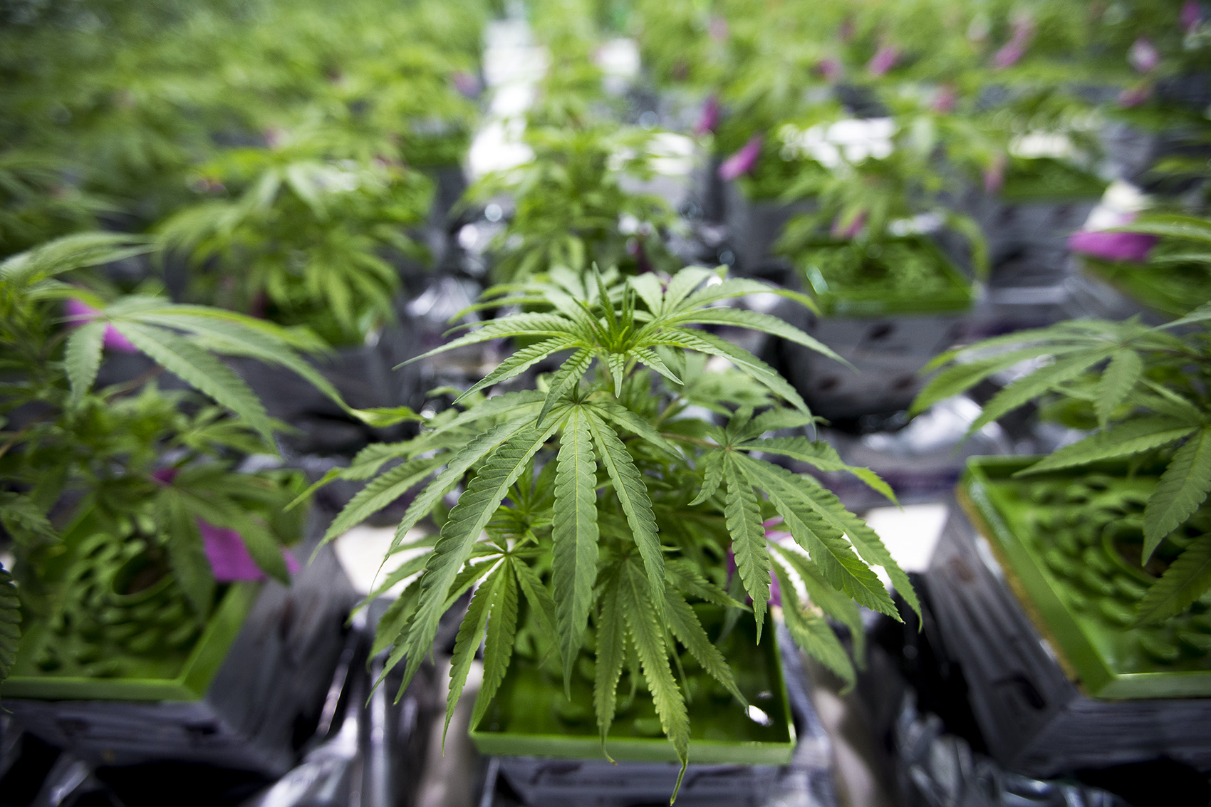 Retail Value Of Car >> Mass. House To Take Up Pot Bill This Week | WBUR News