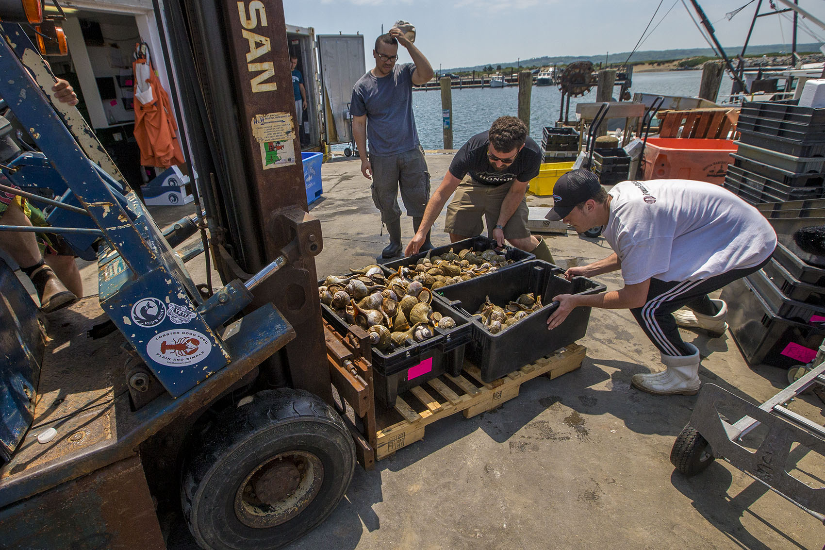 Workers from the Menemsha Fish House on Martha's Vineyard load bins of conch onto a forklift. (Jesse Costa/WBUR)