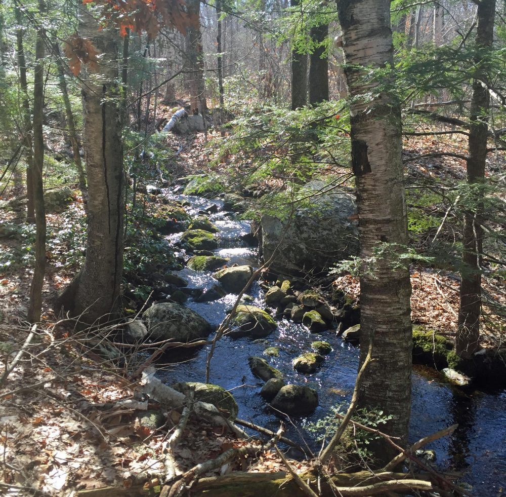 A section of the forest reserve from Falulah Brook in Fitchburg. (Courtesy Ralph Baker)