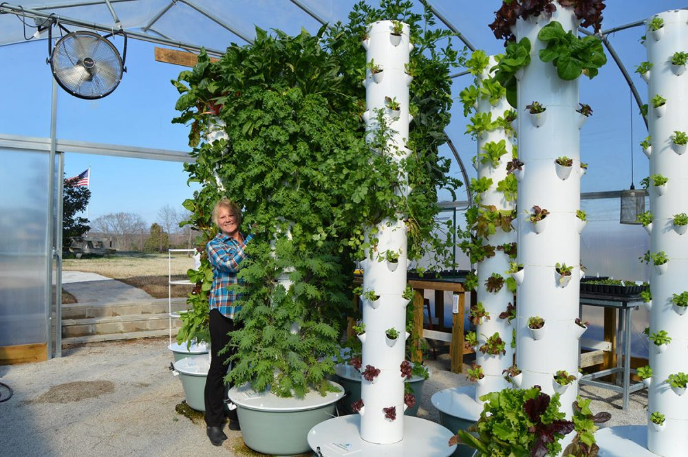 "Mona Hitch tends to one of her 8-foot vertical farming towers. She says she and her husband eat salads grown ""vertically"" in their greenhouse every day. (Caroline Leland)"
