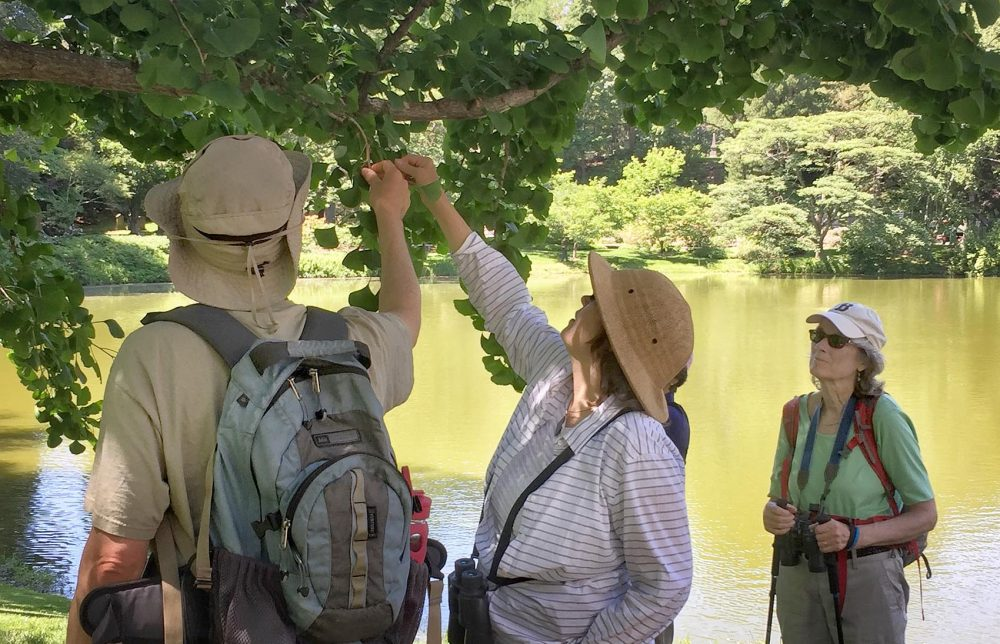 Volunteers and ecologist Brooks Matthewson, left, examine a tree as they track the effects of climate change at Mount Auburn Cemetery. (Courtesy Jeanne Mooney)