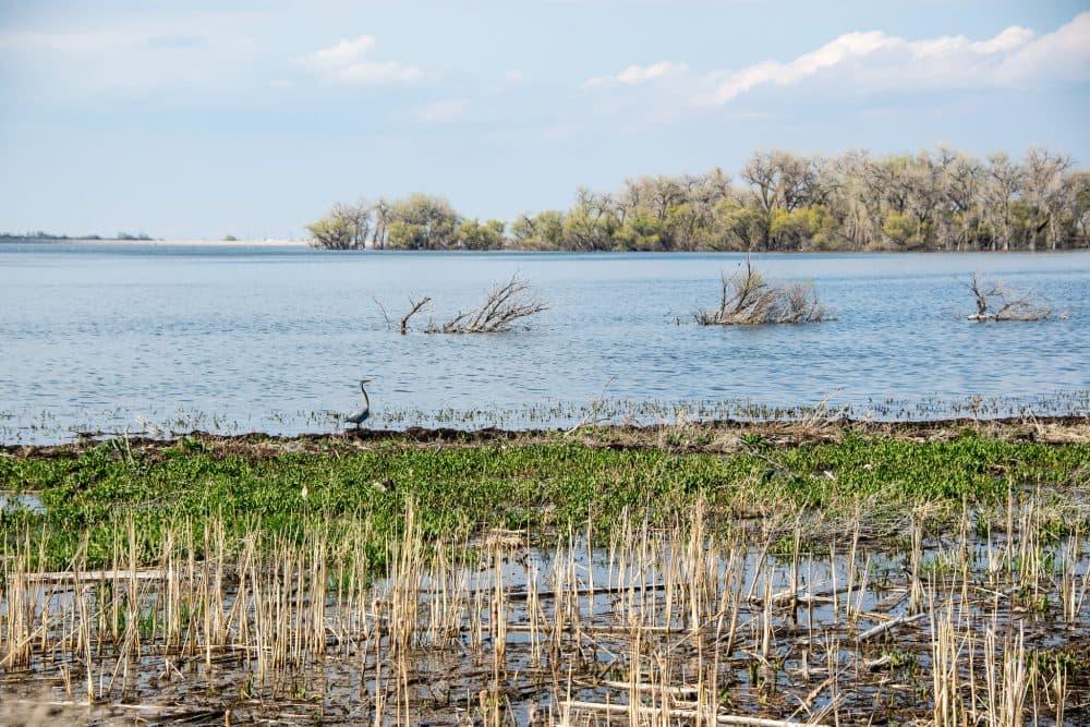 Barr Lake State Park, Adams County, Colorado, April 20, 2015. (Kent Kanouse/Flickr)