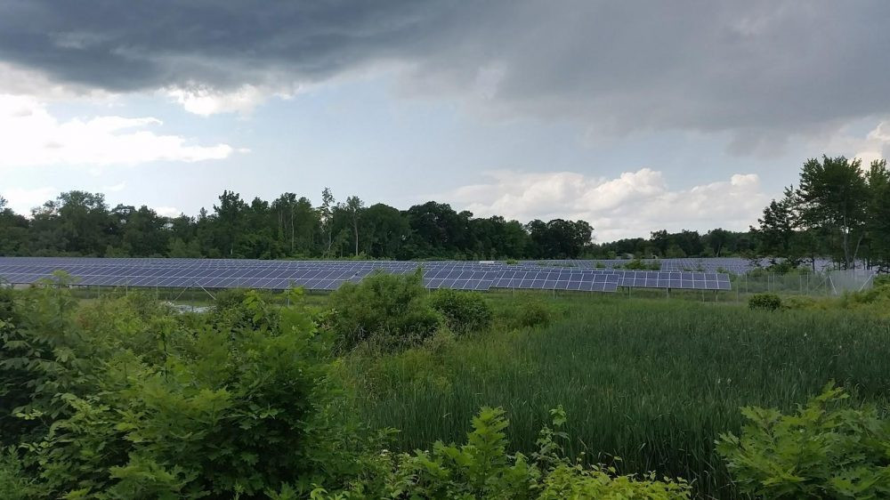 Kevin Sullivan put solar panels on a portion of his 60 acres of property in Suffield, Connecticut. (Patrick Skahill/WNPR)