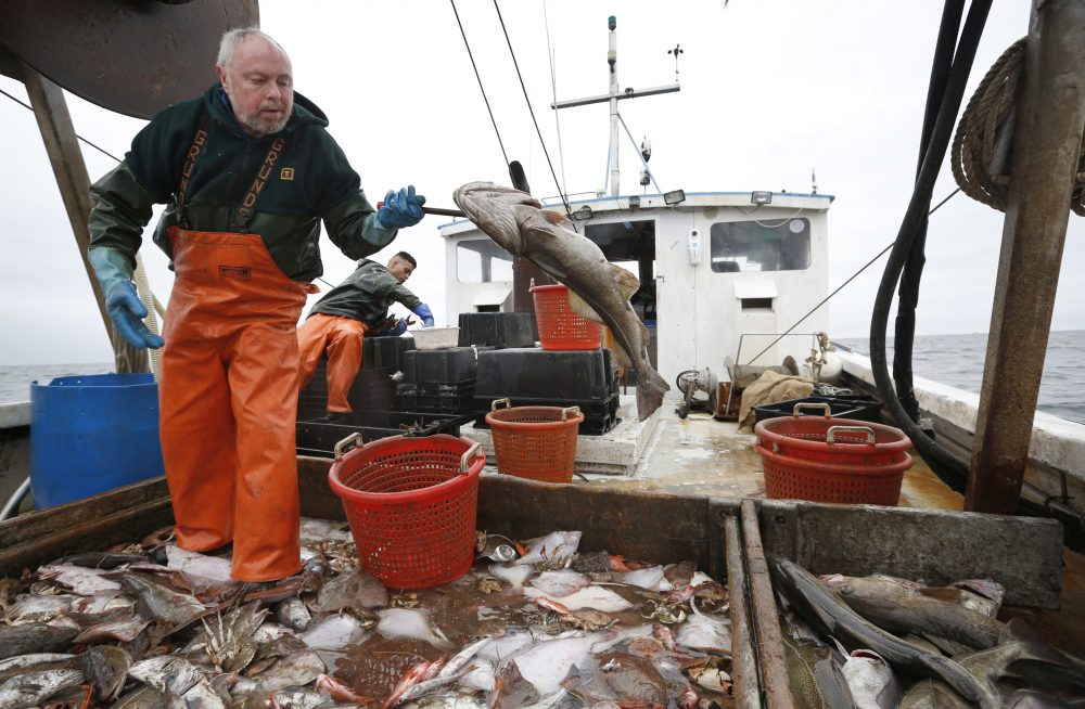 """It's driving people off the water,"" New Hampshire fisherman David Goethel (pictured) said. ""Fishermen are really angry. Every day I get calls from people on the water thanking me for keeping this up."" (AP Photo/Robert F. Bukaty)"