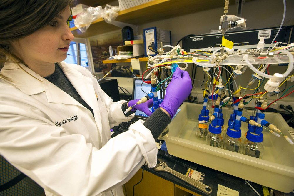 Shannon Nangle and her colleagues at the Silver Lab at Harvard Medical School are working on a project that could one day help reduce a cause of global warming. (Jesse Costa/WBUR)