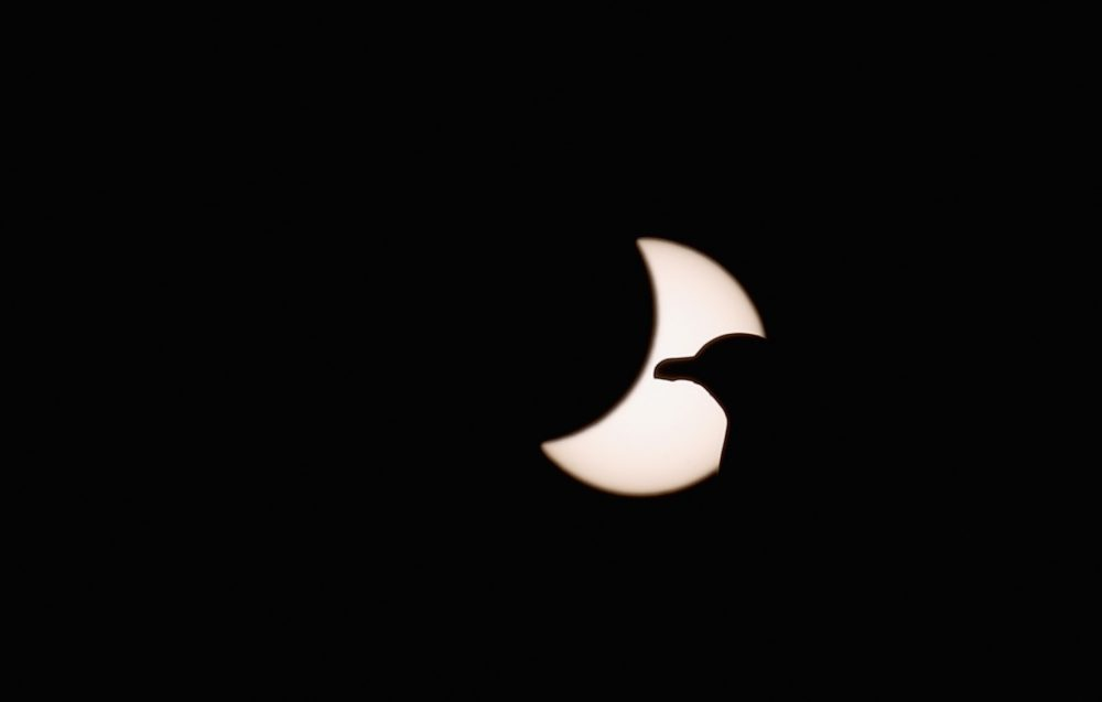 A seagull is pictured in front of the sun during a partial solar eclipse on March 20, 2015, in Tonypandy, Wales, United Kingdom. (Christopher Furlong/Getty Images)