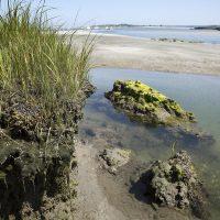 As the ocean slowly advances it undercuts the salt marsh in Essex until it collapses into the water. (Robin Lubbock/WBUR)