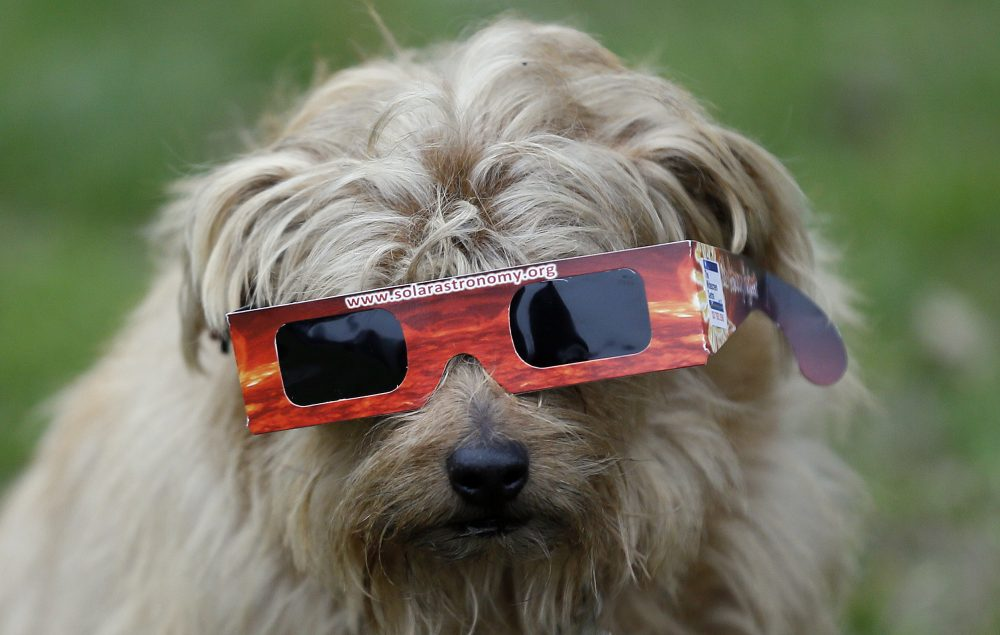 A dog wears solar glasses in preparation to view the eclipse in Regent's Park in London, Friday, March 20, 2015. (Kirsty Wigglesworth/AP)