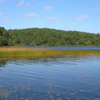 A kettle pond shoreline in the Cape Cod National Seashore (Courtesy CCNS)