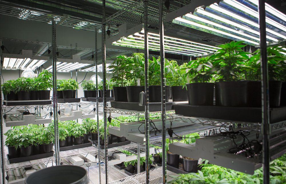 Massachusetts is looking for a new marijuana inspector. (Jesse Costa/File/WBUR)