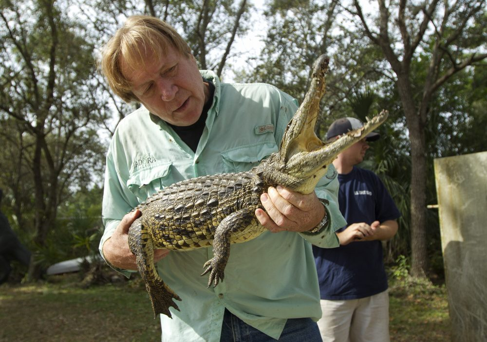 Joe Wasilewski, pictured here in 2012, works with a captured Nile crocodile, caught near his Homestead, Fla., home. Wasilewski survived Hurricane Andrew in 1992, and decided to stay this time around and face Irma. (J Pat Carter/AP)