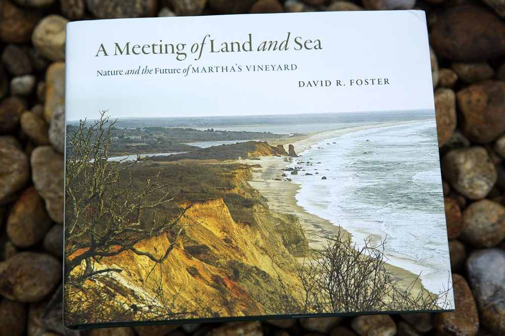 A Meeting Of Land And Sea, by David R. Foster. (Robin Lubbock/WBUR)