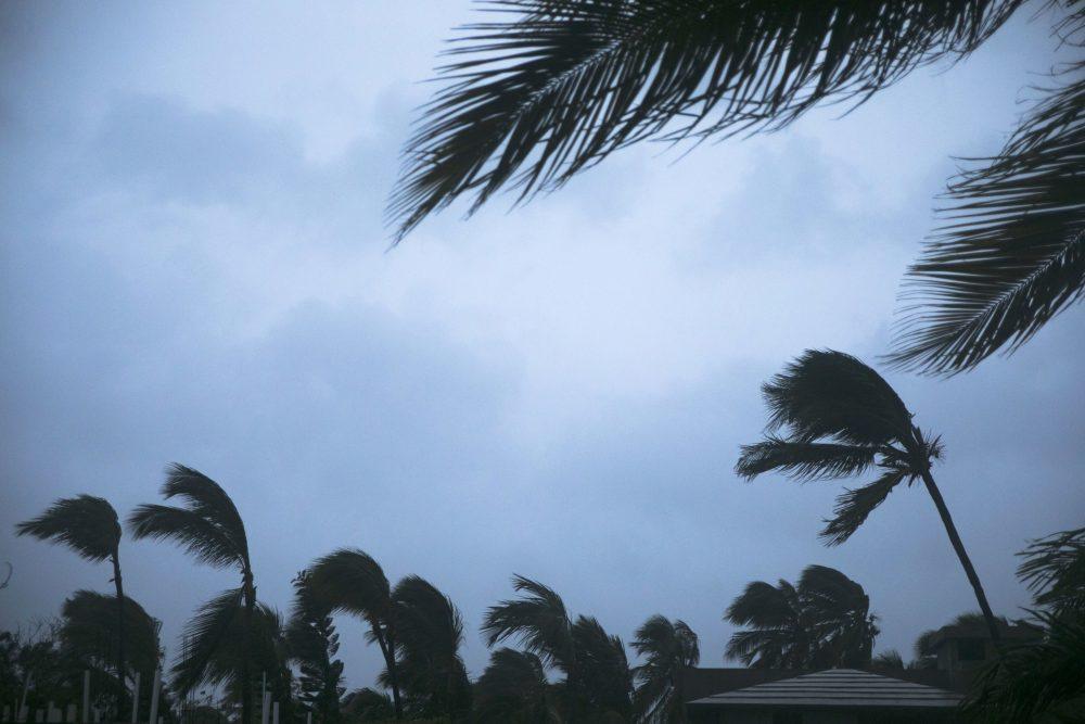 Wind shakes palm trees as Hurricane Maria approaches the coast of Bavaro, Dominican Republic, Wednesday, Sept. 20, 2017. (Tatiana Fernandez/AP)