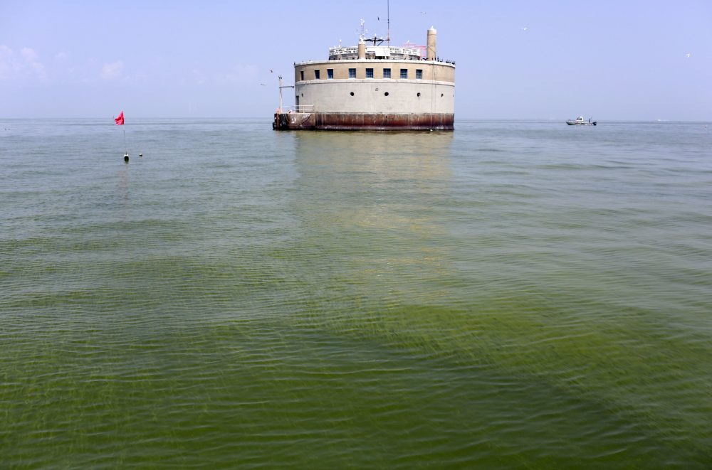In this Aug. 3, 2014 file photo, the City of Toledo water intake crib is surrounded by algae in Lake Erie, off the shore of Curtice, Ohio. (Haraz N. Ghanbari/AP)