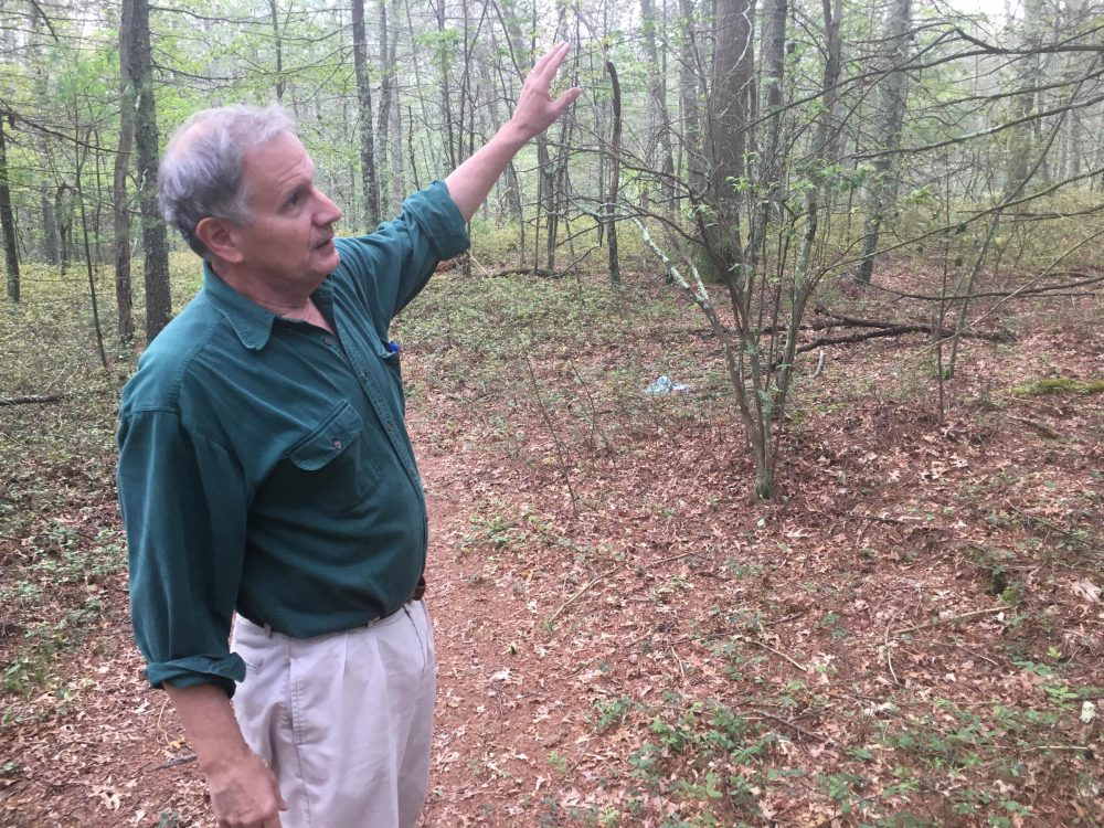 Bill Eccleston, self-proclaimed woodsman and former co-chair of Burrillville's first Comprehensive Planning Committee, discusses the habitat and species found in the George Washington Wildlife Management Area on Sept. 5, 2017. (Avory Brookins/RIPR)
