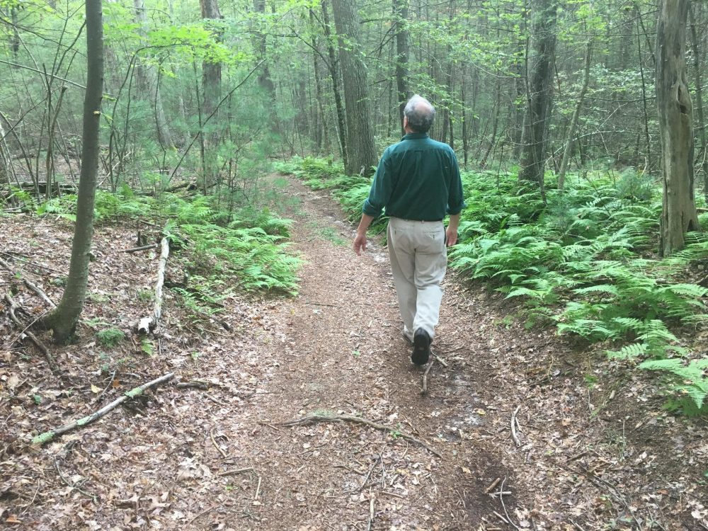 Eccleston walks through the George Washington Wildlife Management Area. (Avory Brookins/RIPR)