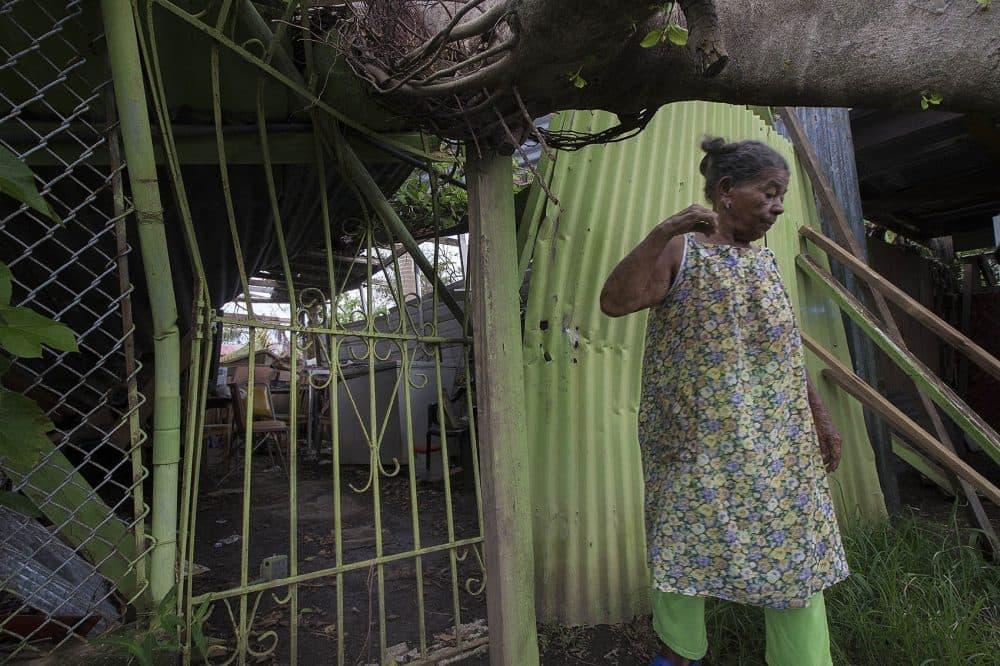 Isabel Garcia had a tree fall on her property in Barrio Las Monjas. (Jesse Costa/WBUR)