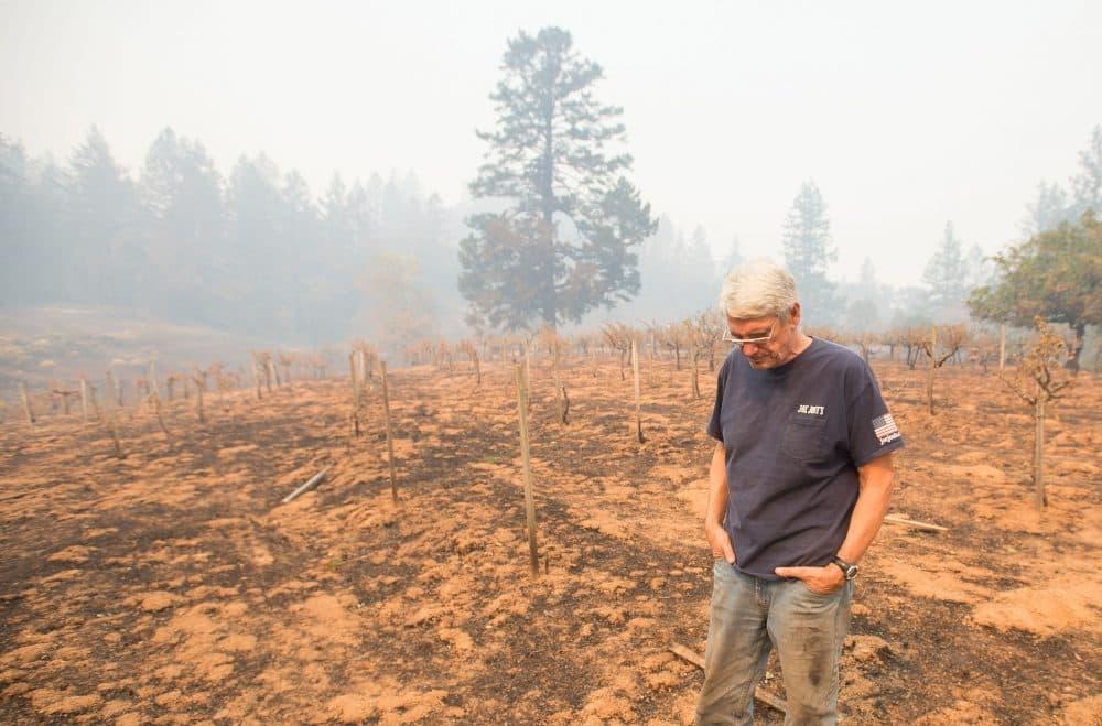 Property owner Chris Schrobilgen stands in his neighbor's burned grape vineyard in Calistoga, Calif., on Oct. 11, 2017. (Josh Edelson/AFP/Getty Images)